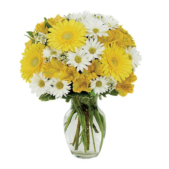 Daisy a Day flower bouquet (BF169-11KM)